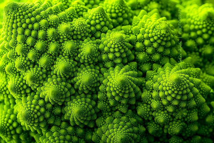 nature-pattern-photography-10